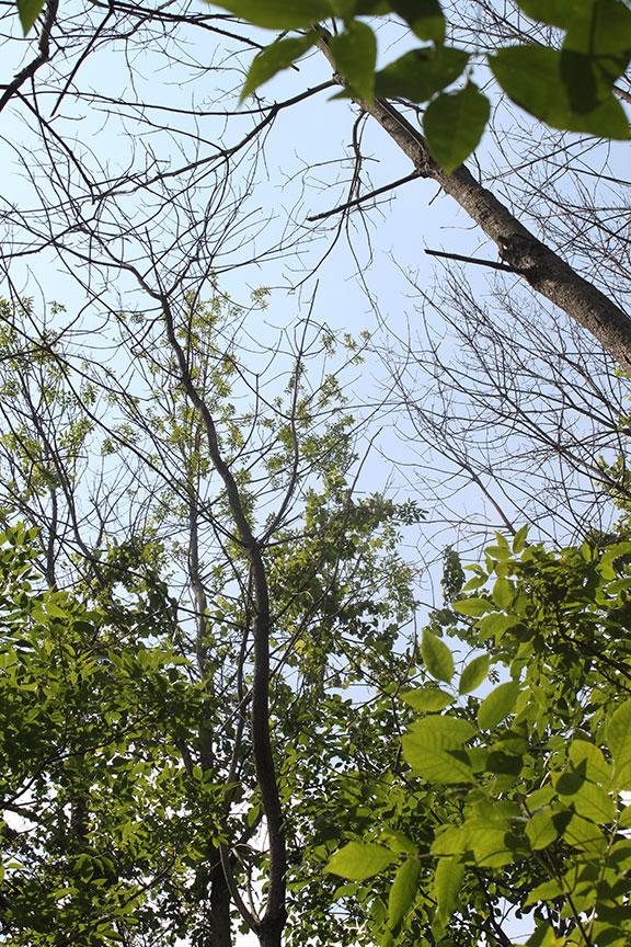 Ash Letter N Tree Alphabet Nature T Ash